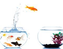 fishbow300l